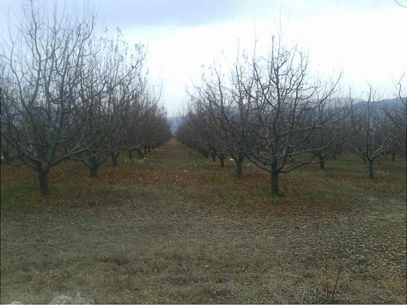 Antalya Elmalı'da 6.930 m2 Elma Bahçesi