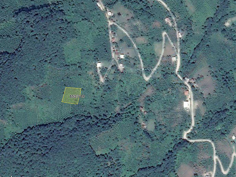 Ordu Akkuş'ta 2249 m2 Fındık Bahçesi