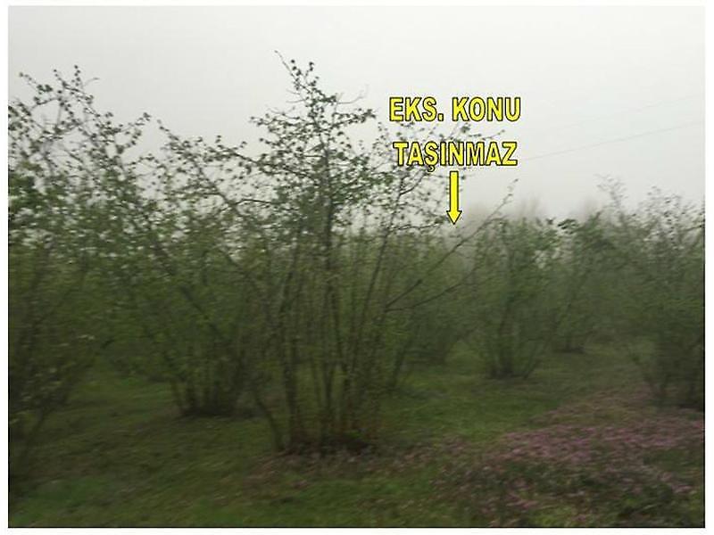 Düzce Merkez Kavakbıçkı Köyü'nde Fındık Bahçesi 5140 m2