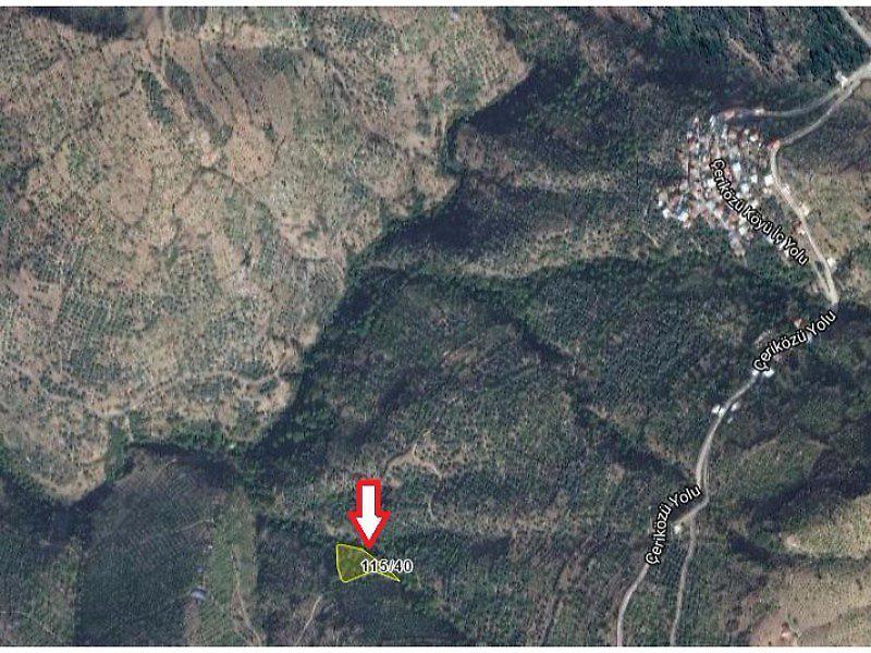 İzmir Tire Çeriközü Köyü'nde 2855 m2 Ceviz Bahçesi