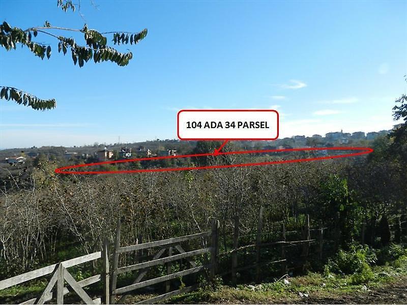 Samsun Terme Dumantepe'de 11.991 m2 Fındık Bahçesi
