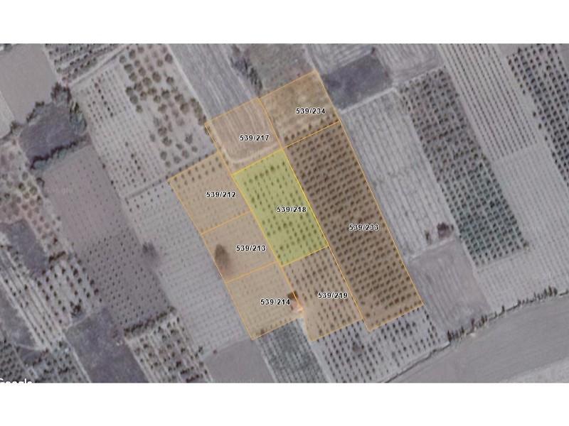 Isparta Senirkent Şirketten Satılık 3554 m2 Tarla