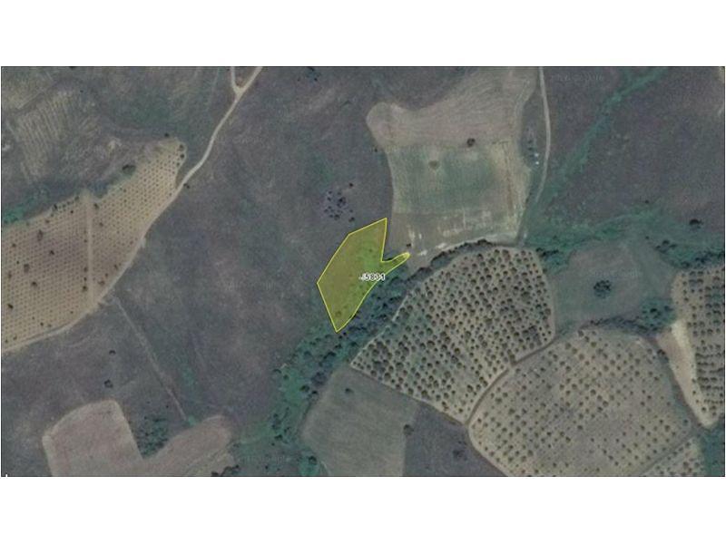 Bilecik Söğüt Bankadan Satılık 2100 m2 Bağ & Bahçe