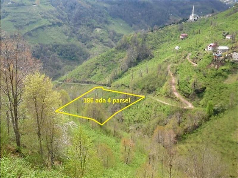 Trabzon Şalpazarı'nda 2.901 m2 Fındık Bahçesi