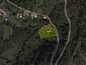 Artvin Borçka Şirketten Satılık 2885 m2 Bağ & Bahçe