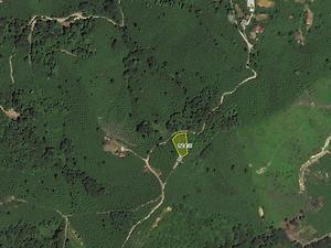 Trabzon Yomra Şirketten Satılık 1160 m2 Bağ & Bahçe