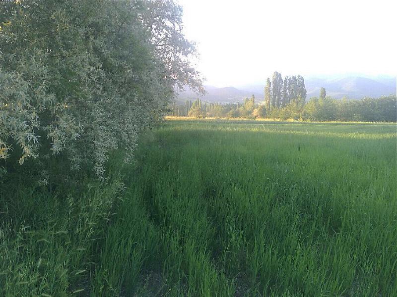 Amasya'da 3782m2 Tarla
