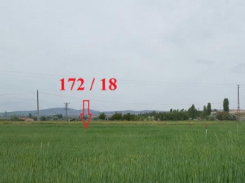 Nevşehir Çiftlik'de 5868 m² Tarla