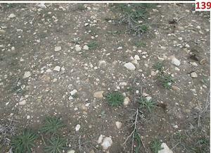 Konya Çumra'da 2 Adet 50.936m2 Tarla
