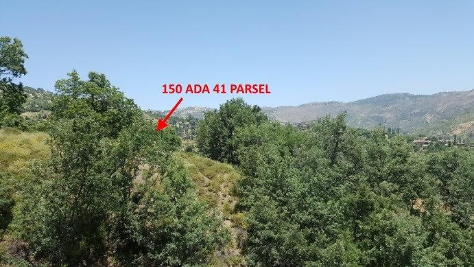 Aydın Nazilli Şirketten Satılık 10217 m2 Tarla