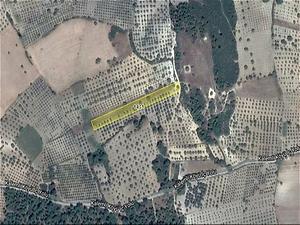 Manisa Şehzadeler Bankadan Satılık 5500 m2 Bağ & Bahçe