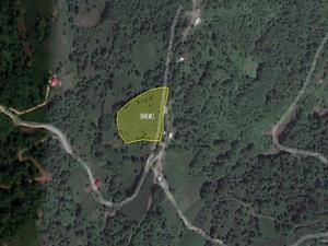 Artvin Hopa Sundura'da 8490 m2 Çay Bahçesi