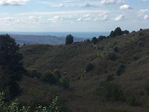 Düzce Akçakoca Hemşin'de 16.449m2 Fındık Bahçesi