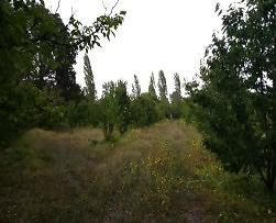 Afyonkarahisar Sultandağı Kırca Köyü'nde 3.660 m2 Tarla