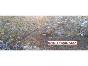 Düzce Akçakoca Yeşilköy Köyünde 8829 m2 Fındık Bahçesi