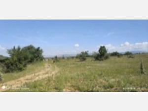 Isparta Şarkikaraağaç Yukarı Dinek Köyünde 7997 m2 Tarla