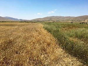 Afyonkarahisar Dinar Çürüklü Köyünde 16.900 m2 Tarla