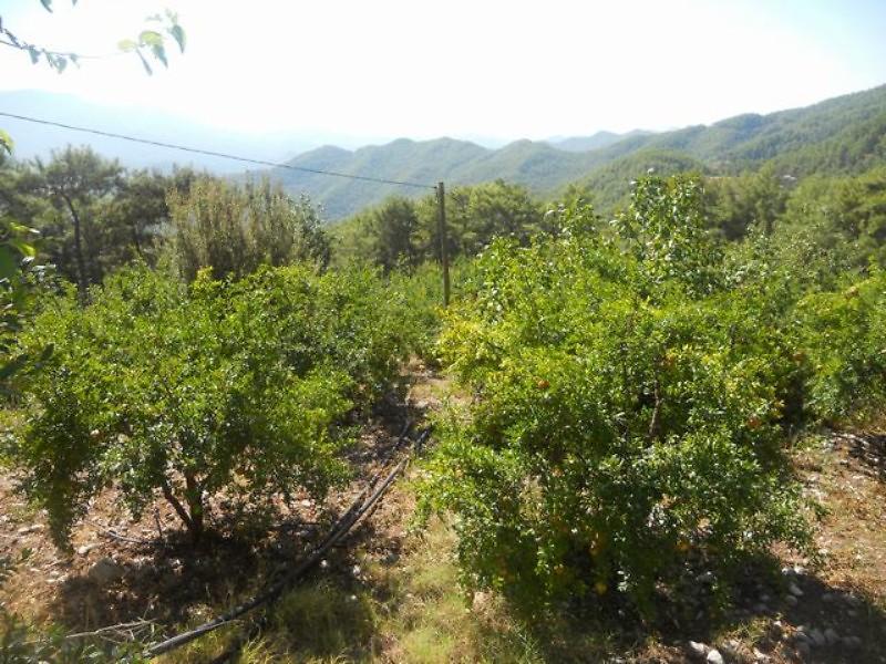 Antalya Kumluca Bankadan Satılık 2190 m2 Bağ & Bahçe