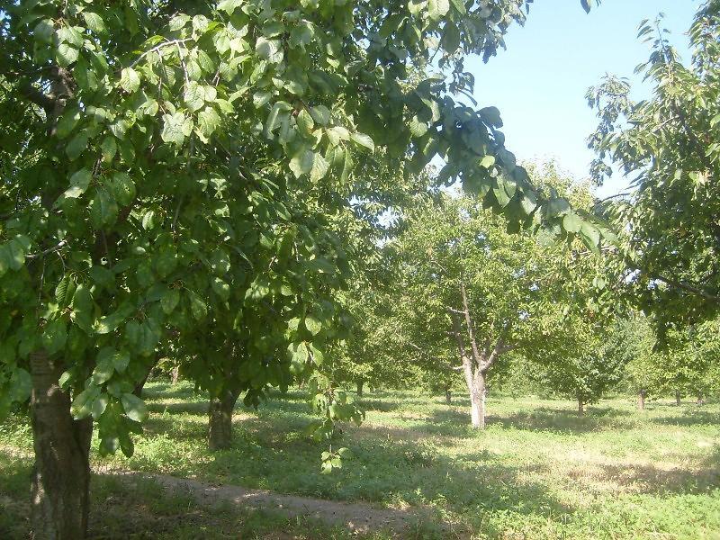 Afyonkarahisar Sultandağı Bankadan Satılık 10086 m2 Bağ & Bahçe