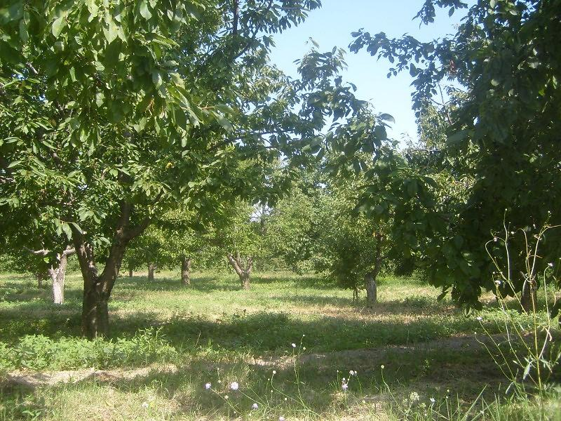 Afyonkarahisar Sultandağı Kırca Köyünde 10086 m2 Bahçe