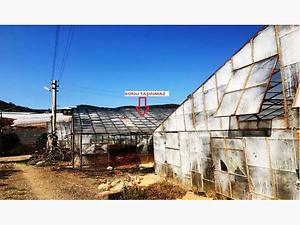 Antalya Gazipaşa Muzkent Köyünde 1790 m2 Sera