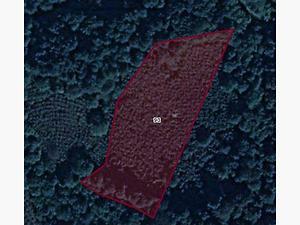 Düzce Merkez Kavakbıçkı Köyünde 10600 m2 Tarla