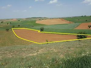 Uşak Sivaslı Ağaçlıbey Köyü'nde 26.300 m2 3 Adet Tarla