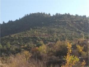 Bilecik İnhisar Samrı Köyünde 1.872 m2 Tarla