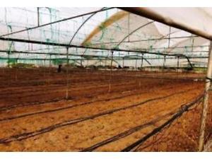 Bilecik İnhisar Koyunlu Köyünde 3.513 m2 Tarla