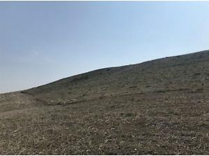 Çorum Sungurlu Derekışla Köyü Gökyar Mevkiinde 10600 m2 Tarla