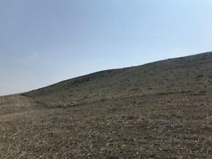 Çorum Sungurlu Derekışla Köyü Akkaya Mevkiinde 16900 m2 Tarla