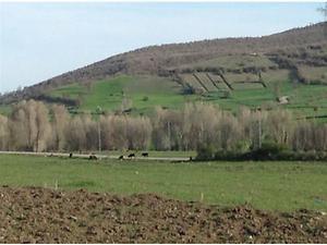 Yozgat Merkez Çadırardıç Köyünde 22.972 m2 Tarla