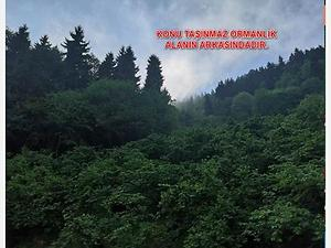 Trabzon Ortahisar Yeşilyurt Mahallesinde 1.642 m2 Fındıklık