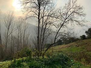 Trabzon Ortahisar Bulak Mahallesinde 7067m2 Tarla