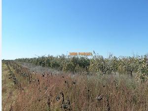 Kırklareli Merkez Kavaklı Beldesinde 800 adet Elma Ağacı 19 Dönüm Tarla