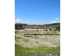 Manisa Şehzadeler Kırançiftlik Mahallesinde 12800 m2 Zeytinlik