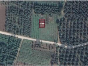 Bursa İznik Ömerli Mahallesinde 233 m2 Bahçe