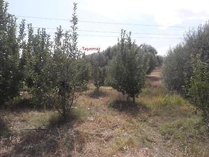 Isparta Gelendost Madenli Köyünde 4050 m2 Tarla