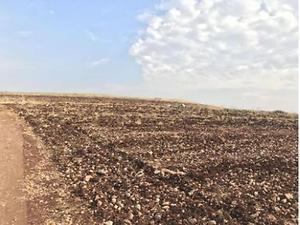 Şanlıurfa Viranşehir Elbeğendi Köyünde 26841 m2 Tarla