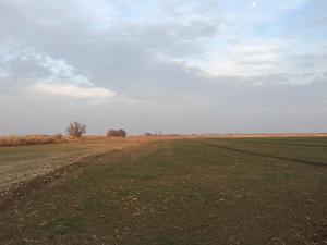 Iğdır Karakoyunlu Cennetabat Köyü 12713 m2 Tarla