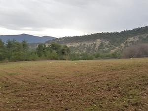 Bilecik Gölpazarı Kuşçuören Köyü'nde 7395 m2 Tarla