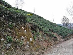 Artvin Kemalpaşa Çamurlu Köyünde 648 m2 Çay Bahçesi