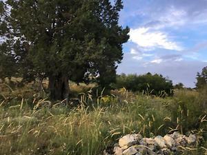 Karaman Ermenek Kazancı Yukarı Mahallesinde 25 Dönüm Tarla