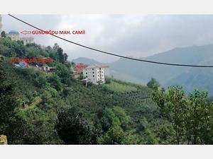 Ordu Çatalpınar Gündoğdu Mahallesinde 2 Katlı Bina ve Fındık Bahçesi
