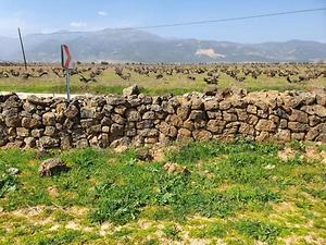 Gaziantep İslahiye Aydınoğlu Mahallesinde 7750 m2 Üzüm Bağ