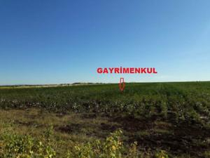 Diyarbakır Ergani Doğanköy Mahallesi'nde 130 DönümTarla