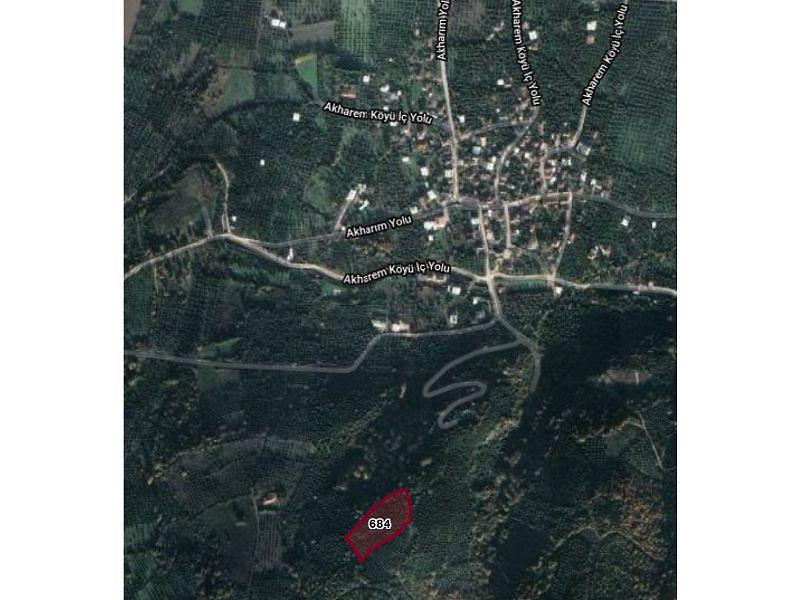 Bursa Orhangazi Akharım Mahallesi'nde 5750 m2 Zeytinlik