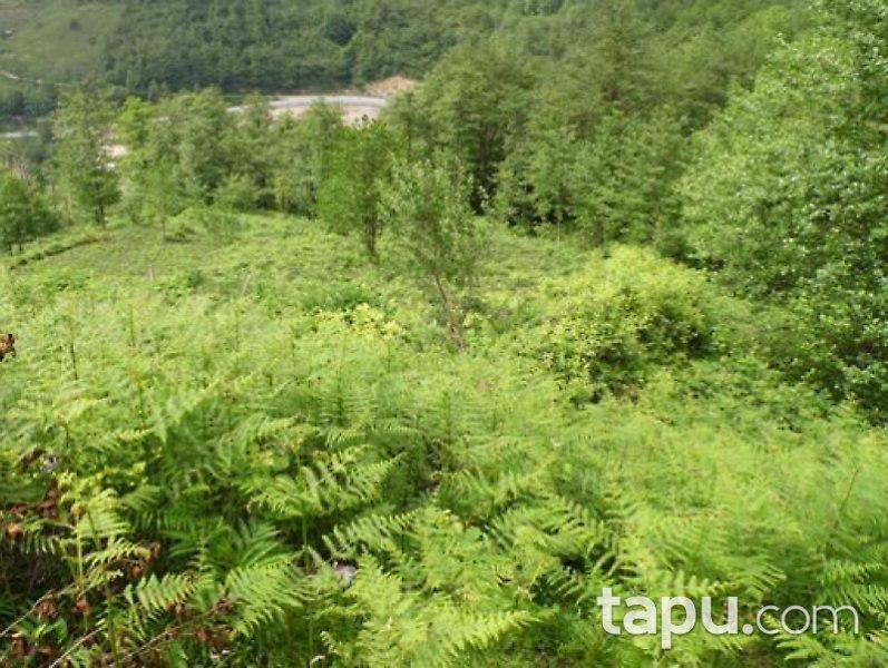 Artvin Hopa'da 6.925 m2 Çay Bahçesi