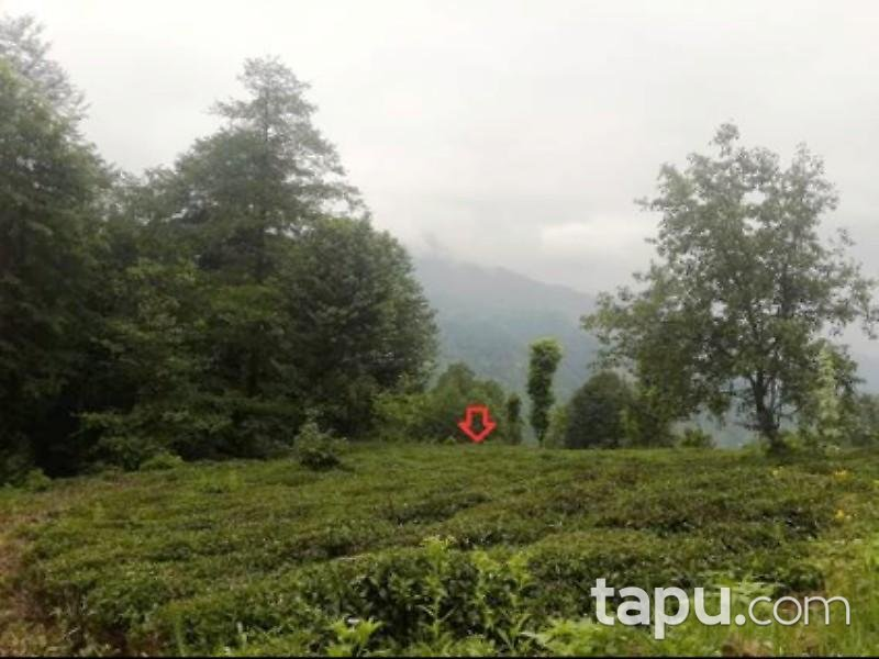 Rize Ardeşen Aşağıdurak Köyü Sırt Mahallesinde 2612 m2 Çay Bahçesi