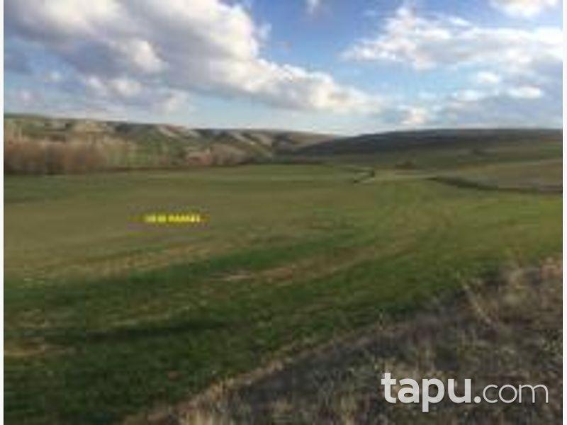 Yozgat Yerköy Sarıyaprak Köyünde 9500 m2 Tarla